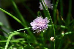 Purple Spiky Flower