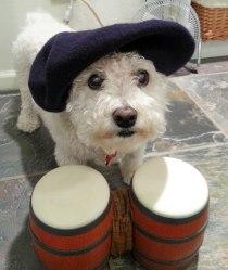 Jazz Puppy