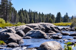 Attempting to get a cumulative 4.0 GPA is like walking upstream on the Truckee River--it's difficult, you're probably going to feel some pain at some point, there are multiple seen and unseen obstacles, and it can be done. In my opinion, both journeys are worth their rewards. Photo By: Elizabeth Preston