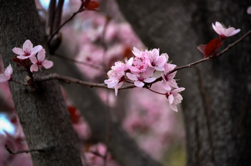 Even in the midst of thousands of flowers, one blossom can still stand out. Photo By: Elizabeth Preston