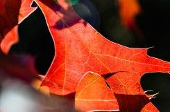 Leaf Trails (1 of 1)