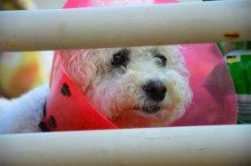 Doggie in a Cone