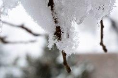 January Snow (1 of 1)-2