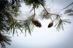 January Snow