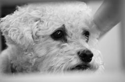 Sad Puppy