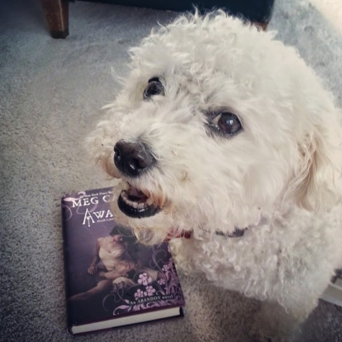 You know that excited feeling you get while reading a great book for the first time?  My dog looks like she gets it too.  Or maybe I had a cookie in my hand while I took the picture.  Who can really say? Photo By: Elizabeth Preston