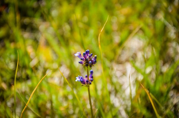 Cute little wildflower. Photo By: Elizabeth Preston