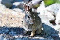 Gumdrop the Bunny