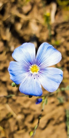 What a pretty blue flower. I don't know what kind it is, though. Does anybody here know? Photo By: Elizabeth Preston