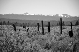 Is it time to mend broken fences? Photo By: Elizabeth Preston