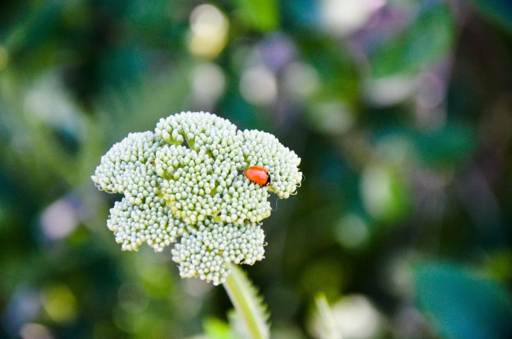 It's just a lady bug hanging out. Photo By: Elizabeth Preston