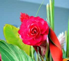 Pink Tropical Flower 1