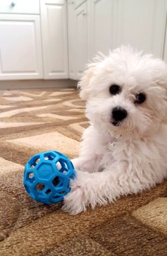 Snowie and a Ball