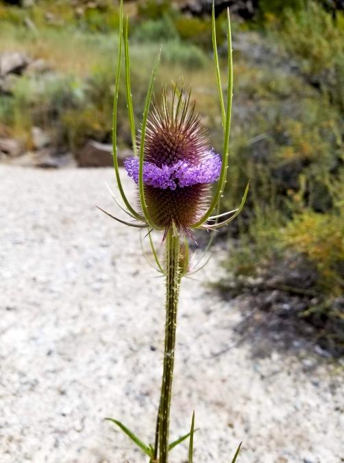 Wildflower Crown
