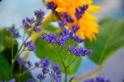 Little Purple Flowers 1