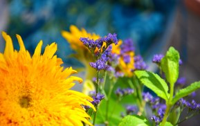 Yellow, Purple, and Green