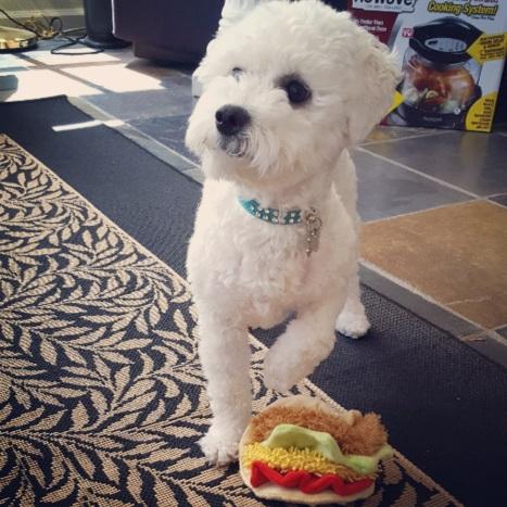 "Taco? Did someone say ""taco?"" Photo By: Elizabeth Preston"
